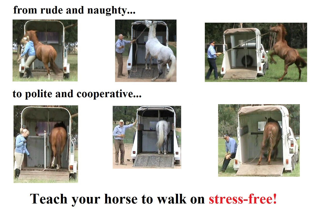 Horse Float Loading And Horse Trailer Loading Training