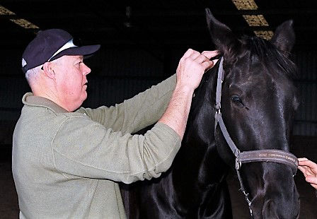 emmett 4 horses - emmett technique - emmett for horses - horse massage