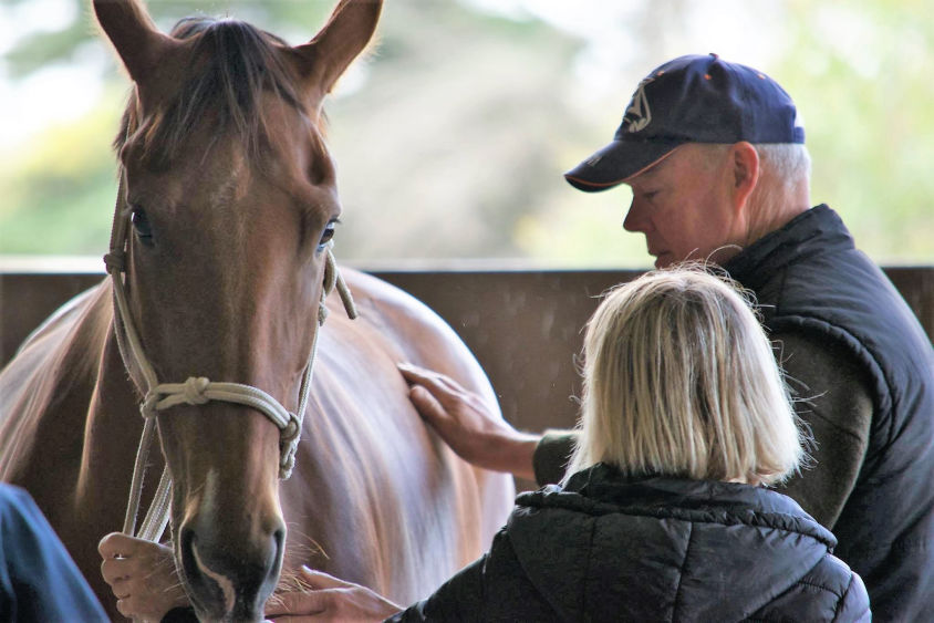 horse massage - emmett 4 horses - emmett for horses - emmett technique