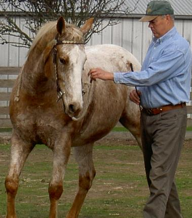 About Australia Natural Horsemanship