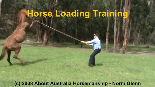 horse loading training for horse floats and horse trailers