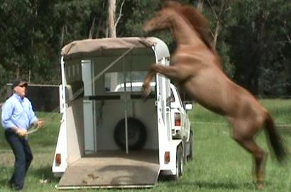 solve horse loading problems