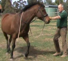 About Australia Horse Training