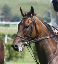 Natural Horsemanship Horse Training Horse Riding