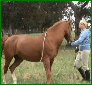 Horsemanship ground work exercises at About Australia Horsemanship with Norm Glenn