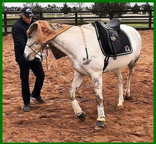 Desensitising your horse. Creating a bomb proof horse. Teaching a spooky horse at About Australia Horsemanship with Norm Glenn