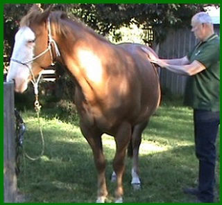 Equine massgae, horse massage, emmett technique, emmett therapy, emmett practitioner