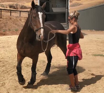 horse training to increase your horsemanship skills including groundwork and horse riding lessons with About Australia Horsemanship and Norm Glenn