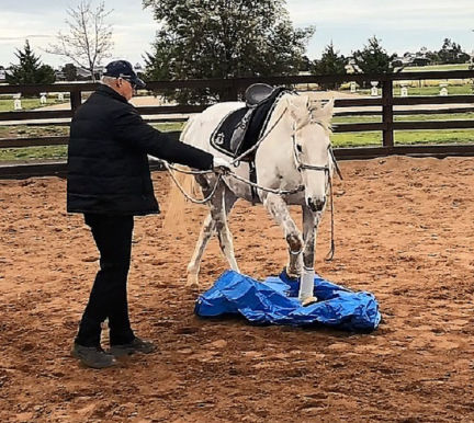 Ground work exercises with About Australia Horsemanship and Norm Glenn