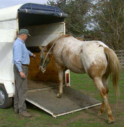 Horse Float Loading And Horse Trailer Loading Problems And
